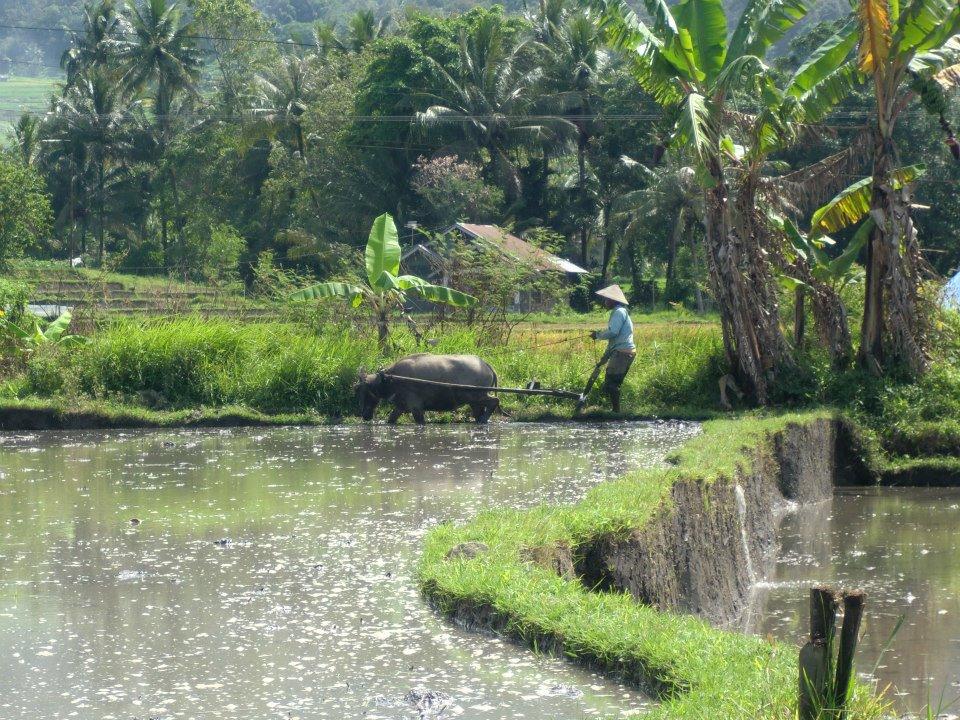 Sumatra_Indonesie_2012